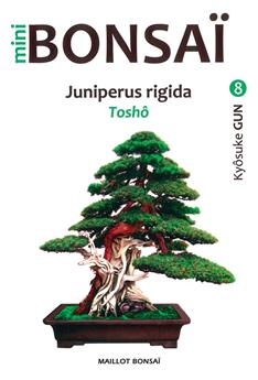Mini Bonsaï - Juniperus rigida